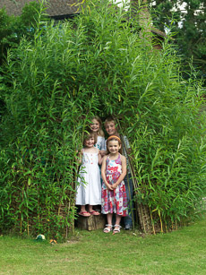 Thumbnail image for Living Willow Structures