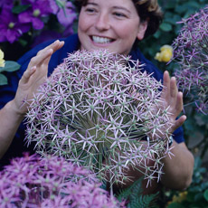 Thumbnail image for Allium Plant Profile