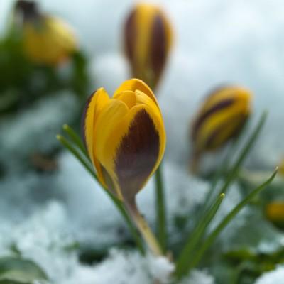 wpid3009-Ockwell-in-Snow-BCRO026-nicola-stocken.jpg