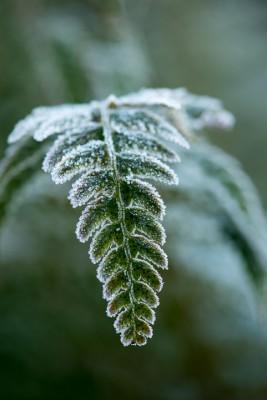 wpid3023-Ockwell-in-Snow-FFER021-nicola-stocken.jpg