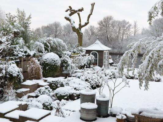 wpid3037-Ockwell-in-Snow-GOCK137-nicola-stocken.jpg