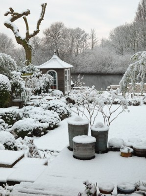 wpid3041-Ockwell-in-Snow-GOCK139-nicola-stocken.jpg