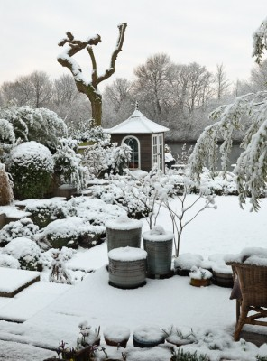 wpid3043-Ockwell-in-Snow-GOCK140-nicola-stocken.jpg