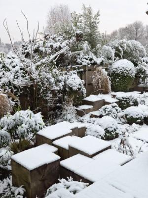 wpid3045-Ockwell-in-Snow-GOCK141-nicola-stocken.jpg
