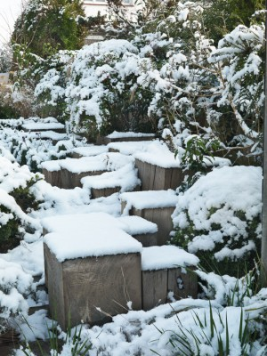 wpid3047-Ockwell-in-Snow-GOCK142-nicola-stocken.jpg