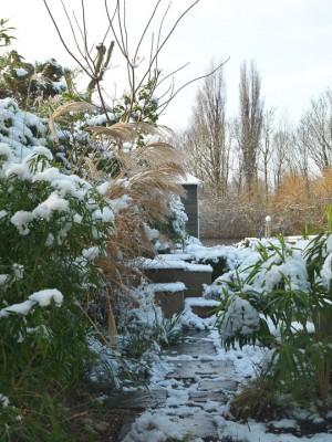wpid3053-Ockwell-in-Snow-GOCK145-nicola-stocken.jpg