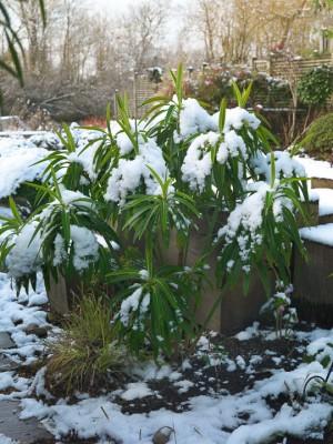 wpid3055-Ockwell-in-Snow-GOCK146-nicola-stocken.jpg