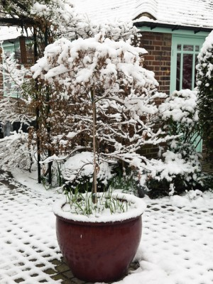 wpid3065-Ockwell-in-Snow-GOCK153-nicola-stocken.jpg