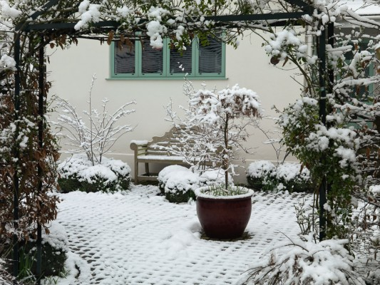 wpid3067-Ockwell-in-Snow-GOCK154-nicola-stocken.jpg