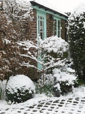 wpid3069-Ockwell-in-Snow-GOCK155-nicola-stocken.jpg