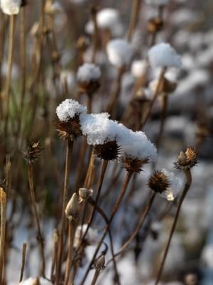 wpid3087-Ockwell-in-Snow-PECH076-nicola-stocken.jpg