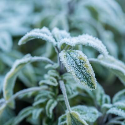 wpid3099-Ockwell-in-Snow-PSAL083-nicola-stocken.jpg