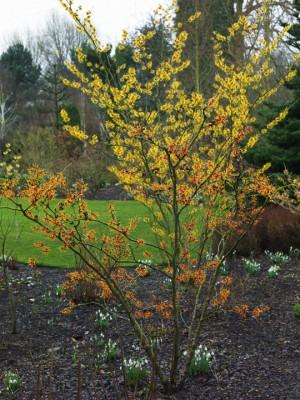 wpid3201-Johns-Garden-GASH080-nicola-stocken.jpg