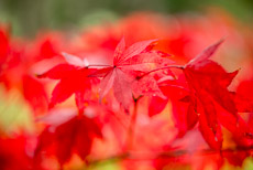 Thumbnail image for Autumn Colour
