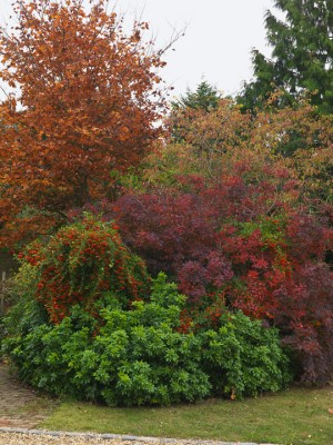 wpid3401-Autumn-Colour-GMAY018-nicola-stocken.jpg