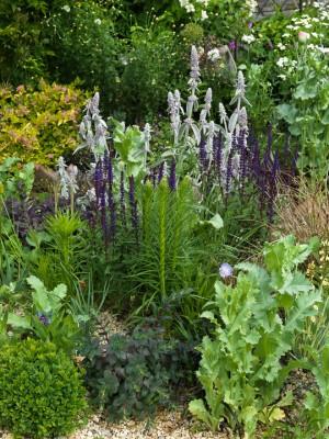 wpid3513-Bens-Acre-Garden-GBEN018-nicola-stocken.jpg