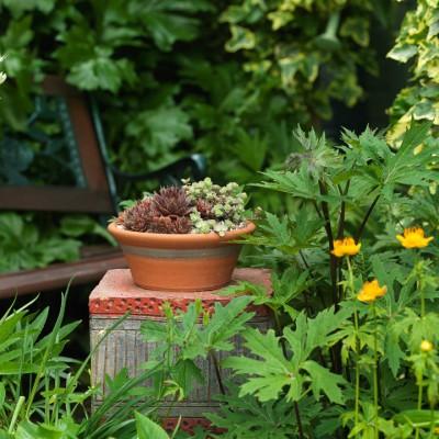 wpid3519-Bens-Acre-Garden-GBEN021-nicola-stocken.jpg