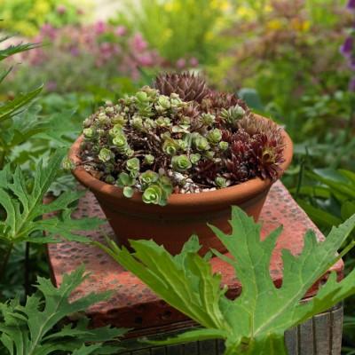 wpid3521-Bens-Acre-Garden-GBEN022-nicola-stocken.jpg