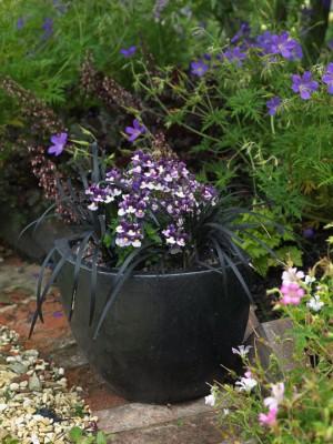 wpid3523-Bens-Acre-Garden-GBEN023-nicola-stocken.jpg