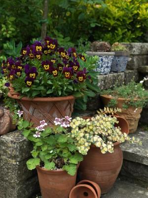 wpid3527-Bens-Acre-Garden-GBEN025-nicola-stocken.jpg