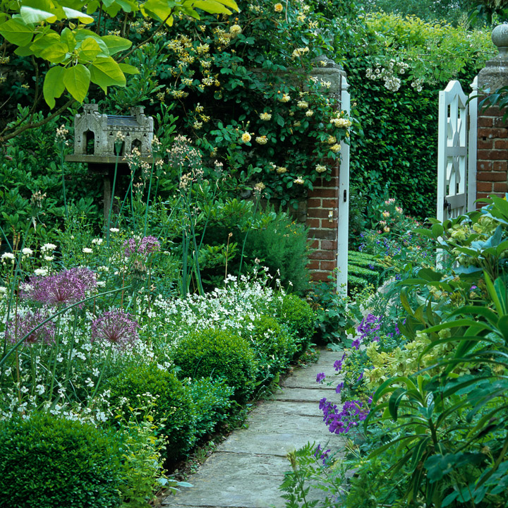 Climbing plants for Climbing flowering plants for fences