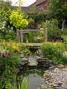 Thumbnail image for Crecy Close Garden