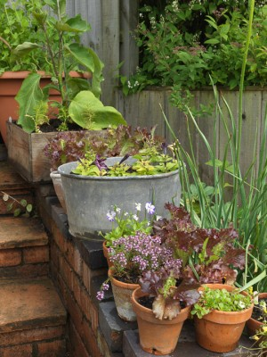 wpid4356-Celebrity-Gardeners-Tips-GALY016-nicola-stocken.jpg