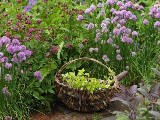 wpid4358-Celebrity-Gardeners-Tips-GALY029-nicola-stocken.jpg