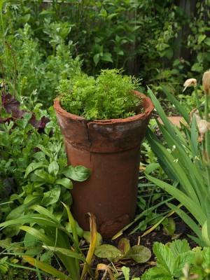 wpid4360-Celebrity-Gardeners-Tips-GALY034-nicola-stocken.jpg