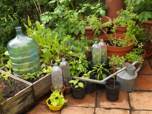 wpid4366-Celebrity-Gardeners-Tips-GALY039-nicola-stocken.jpg