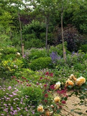wpid4382-Celebrity-Gardeners-Tips-GKIM116-nicola-stocken.jpg