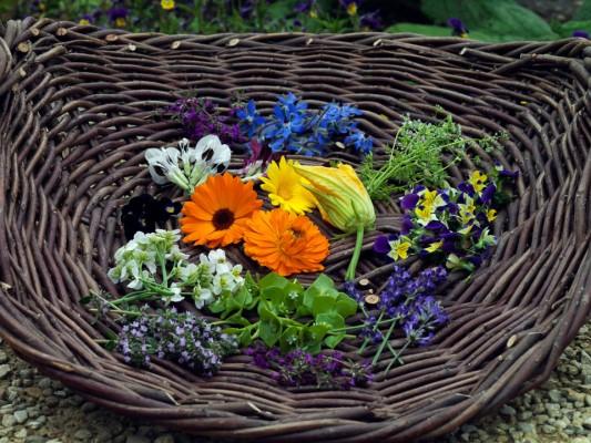 wpid4388-Celebrity-Gardeners-Tips-GRAY021-nicola-stocken.jpg