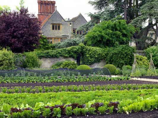 wpid4390-Celebrity-Gardeners-Tips-GRAY024-nicola-stocken.jpg