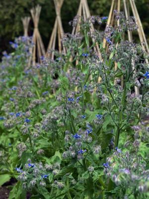 wpid4392-Celebrity-Gardeners-Tips-GRAY030-nicola-stocken.jpg