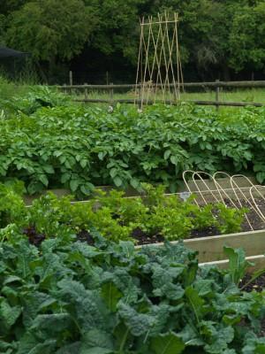 wpid4404-Celebrity-Gardeners-Tips-GRDT034-nicola-stocken.jpg