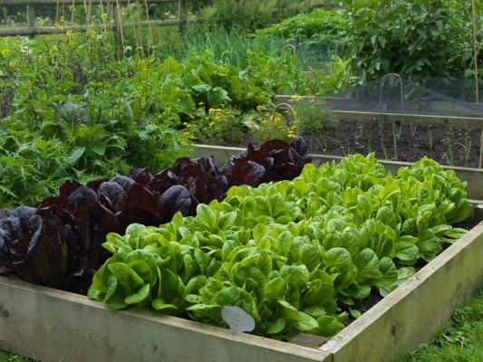 wpid4406-Celebrity-Gardeners-Tips-GRDT038-nicola-stocken.jpg