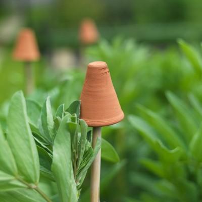 wpid4410-Celebrity-Gardeners-Tips-GRDT049-nicola-stocken.jpg