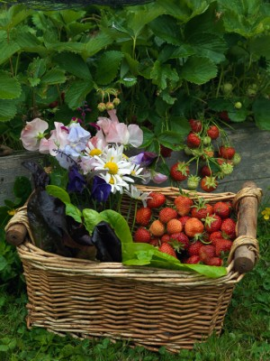 wpid4412-Celebrity-Gardeners-Tips-GRDT053-nicola-stocken.jpg