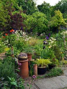 Thumbnail image for Muswell Hill Garden