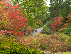 Thumbnail image for Exbury Garden in Autumn