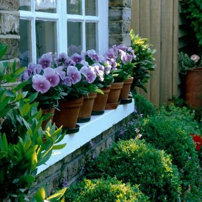 wpid4711-Front-Garden-Design-DFRO011-nicola-stocken.jpg
