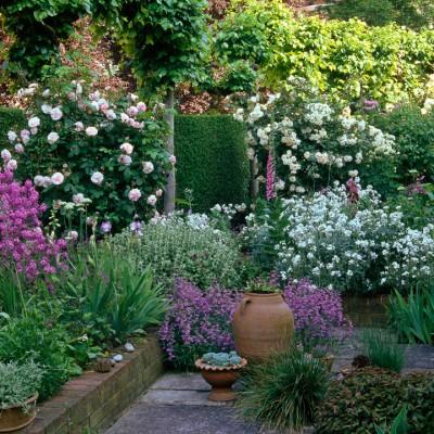 wpid4713-Front-Garden-Design-DFRO014-nicola-stocken.jpg