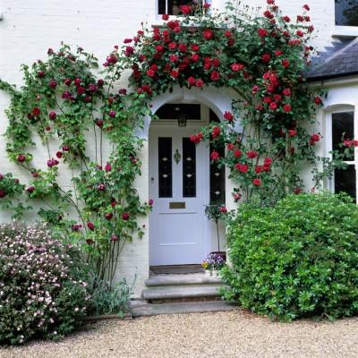 wpid4743-Front-Garden-Design-GBUS013-nicola-stocken.jpg