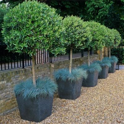 wpid4781-Front-Garden-Design-GSTM014-nicola-stocken.jpg