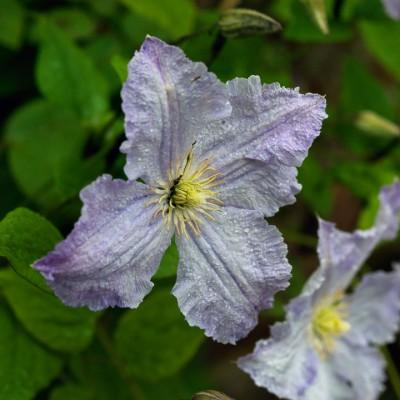 wpid4800-High-Summer-Garden-CCLE295-nicola-stocken.jpg
