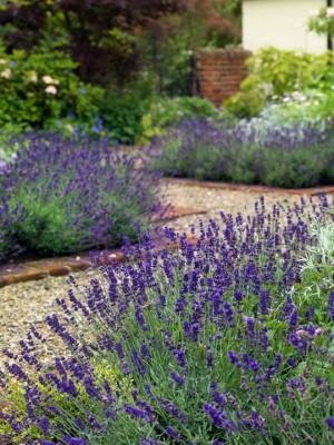 wpid4830-High-Summer-Garden-GGLO097-nicola-stocken.jpg