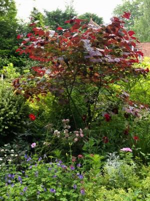 wpid4850-High-Summer-Garden-GGLO110-nicola-stocken.jpg