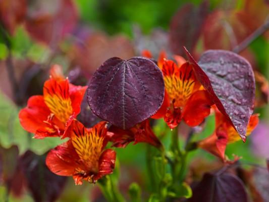 wpid4870-High-Summer-Garden-GGLO120-nicola-stocken.jpg