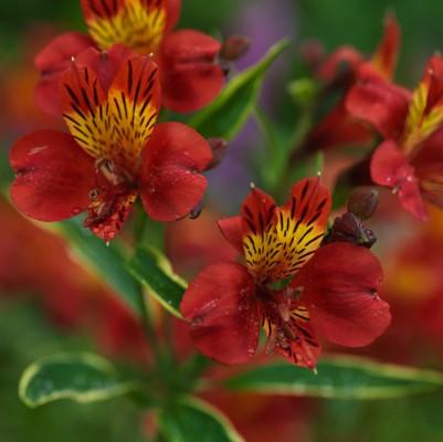 wpid4872-High-Summer-Garden-PALS028-nicola-stocken.jpg