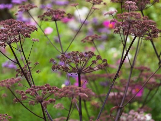 wpid4874-High-Summer-Garden-PANG006-nicola-stocken.jpg
